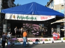 Oplenacka berba 2011_20